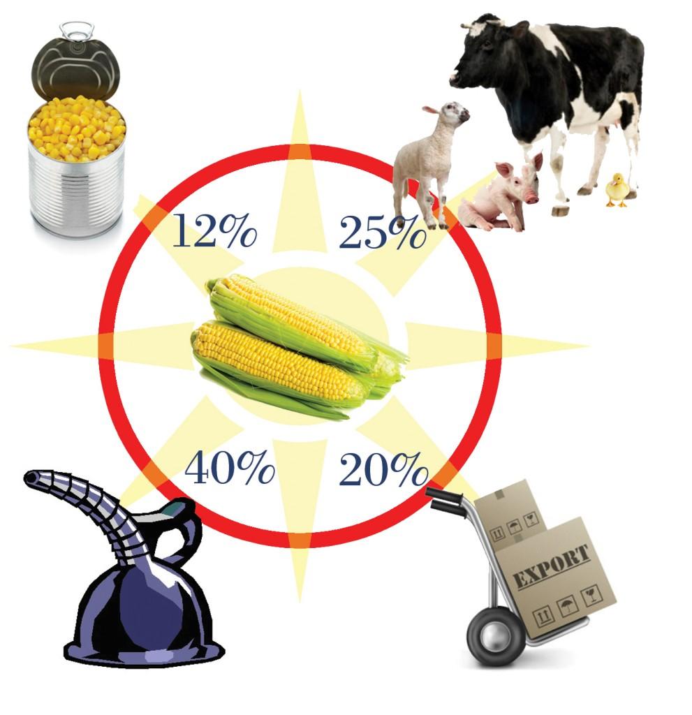 Where does US corn go? www.palmatlanticlandscape.com