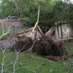 Downed tree after hurricane