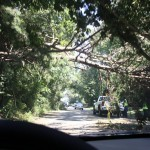 Trees block road after storm