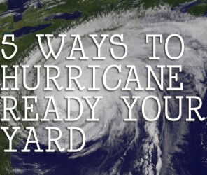 5 ways to prepare your yard for a hurricane // www.palmatlanticlandscape.com // #landscape